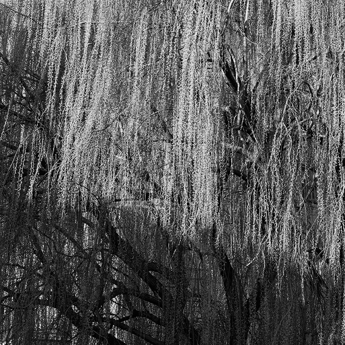03-26-2016_willow_shadow