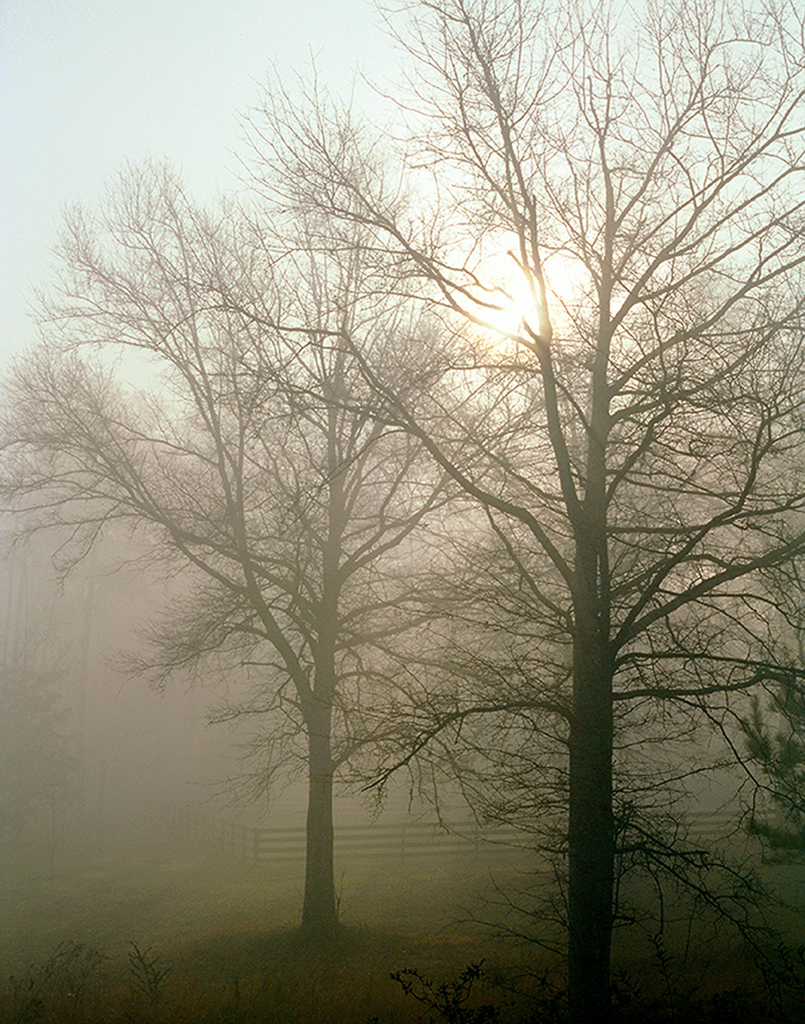 fog_trees_folio