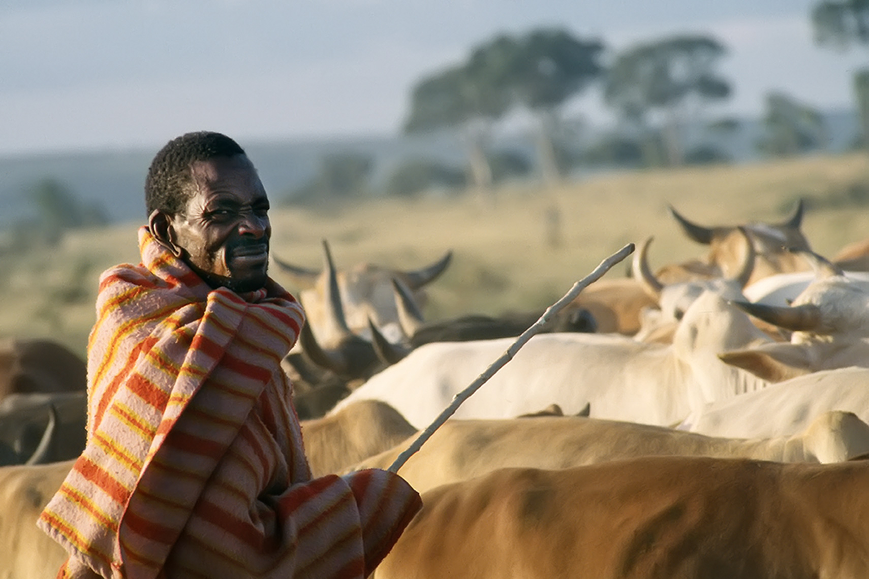maasai_man_cows_folio
